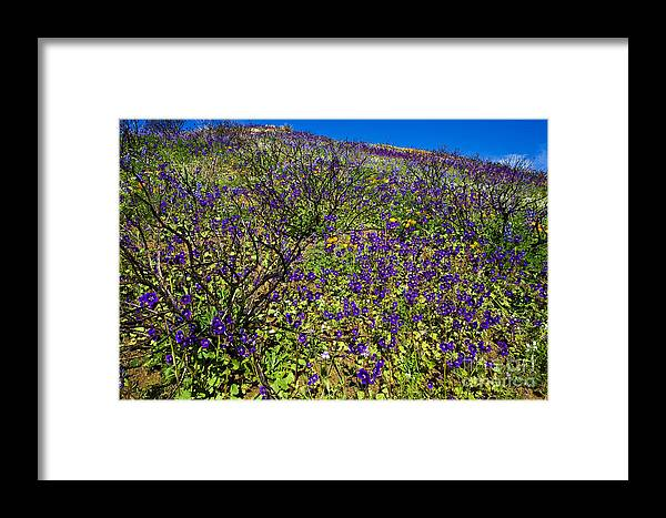 California Framed Print featuring the photograph The Phacelia Patch by Greg Clure