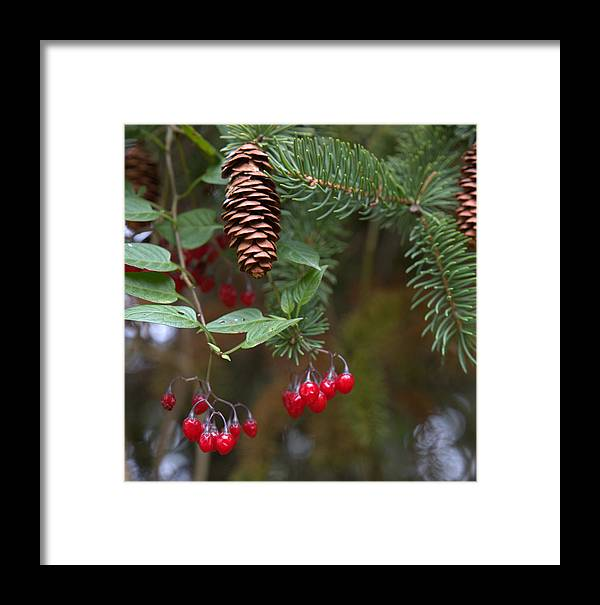 Fall Framed Print featuring the photograph The Pine by Mark Salamon