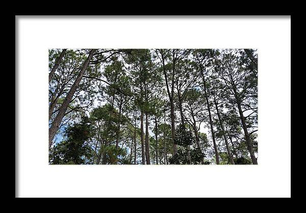 Green Framed Print featuring the photograph The Pines Of Tallahassee by Laura Martin