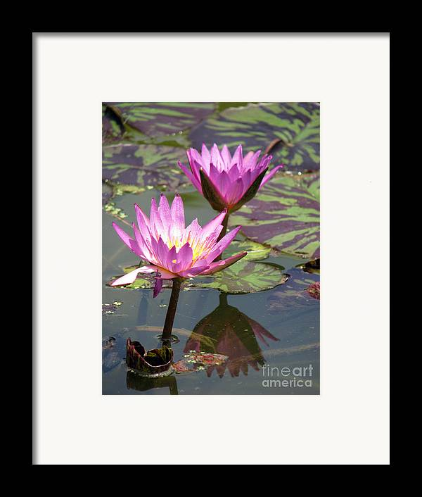Lillypad Framed Print featuring the photograph The Pond by Amanda Barcon