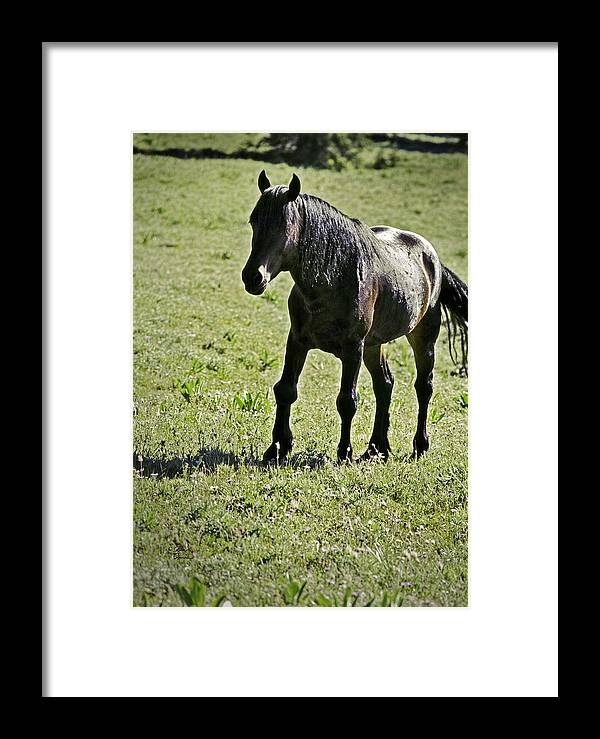 Injury Framed Print featuring the photograph The Price Of War by Richard Rivard