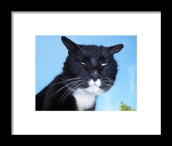 Cat Framed Print featuring the photograph The Puggy Look by Ken Day