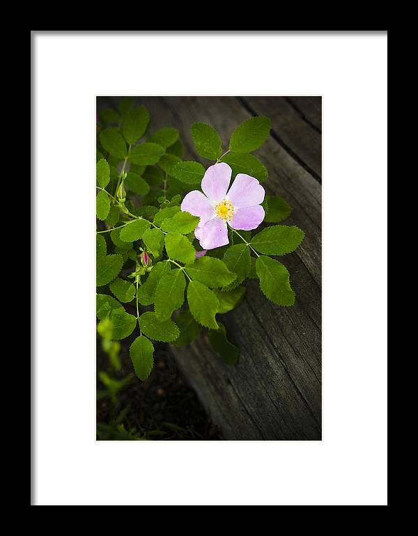 Flower Framed Print featuring the photograph The Purple Flower by Chad Davis