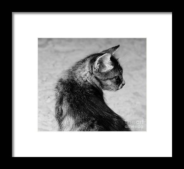 Cat Framed Print featuring the photograph The Purrfect Glance Back by Cloudy Theater