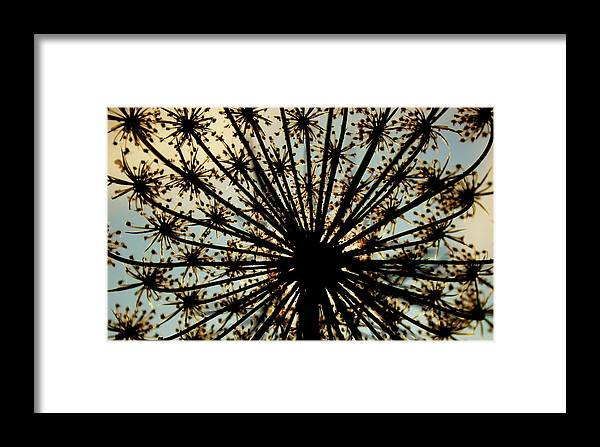 Queen Anne's Lace Framed Print featuring the photograph The Queen's Crown by Toni Jackson