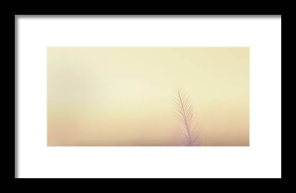 Delicate Framed Print featuring the photograph The Questions Worth Asking by Scott Norris