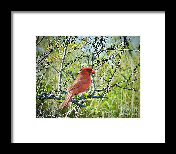 Birds Framed Print featuring the painting The Red Cardinal by Judy Kay
