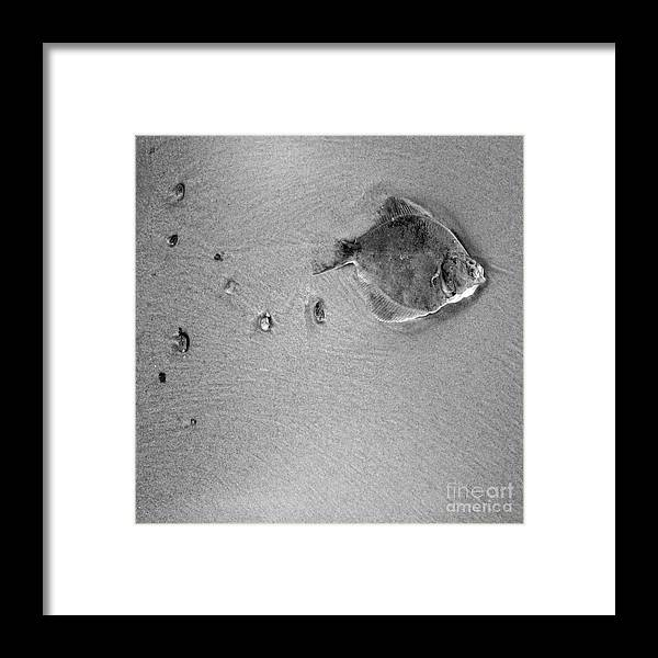 Fish Framed Print featuring the photograph The Relief by Angel Ciesniarska