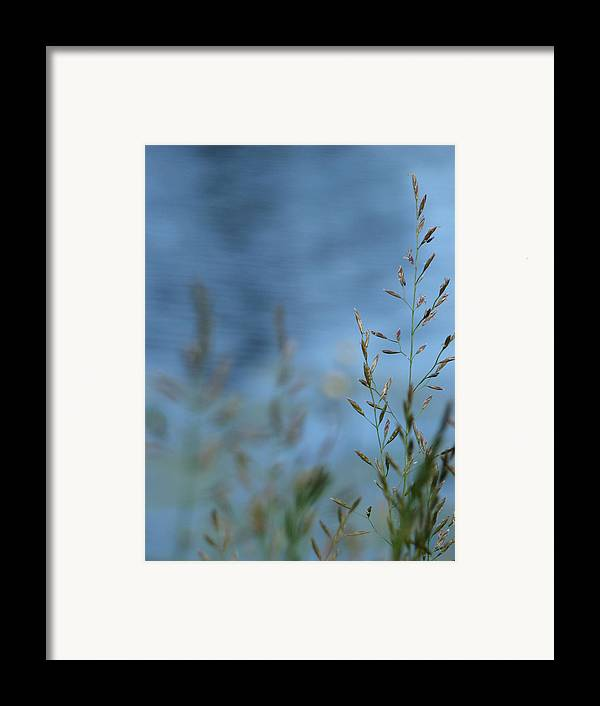 Grass Framed Print featuring the photograph The River Behind by Tingy Wende
