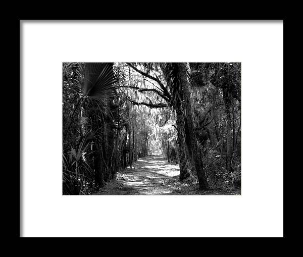 Trees Framed Print featuring the photograph The Road Less Traveled by J M Farris Photography