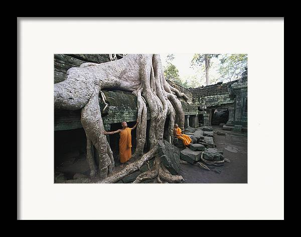 strangler Fig Trees Framed Print featuring the photograph The Roots Of A Strangler Fig Creep by Paul Chesley