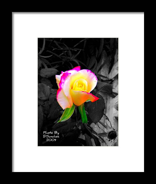 Flower Framed Print featuring the photograph The Rose by Doug Sanchez