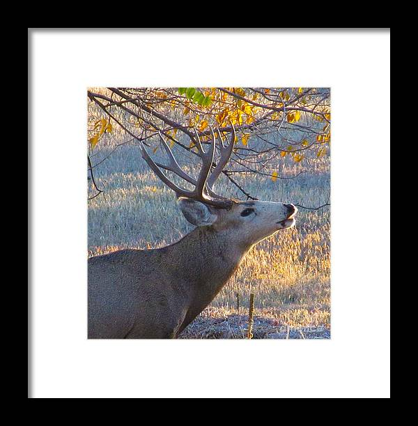 Deer Framed Print featuring the photograph The Rut by Jeff Birr