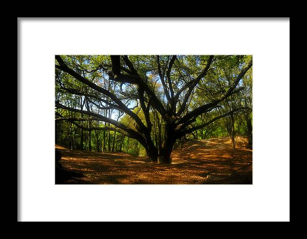 Live Oak Tree Framed Print featuring the photograph The Sacred Oak by David Lee Thompson