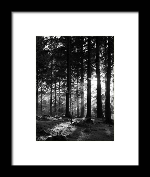 Trees Forest Woods Mono Sapling Evening Light Dusk Rays Light Framed Print featuring the photograph The Sapling by Lloyd Burchell