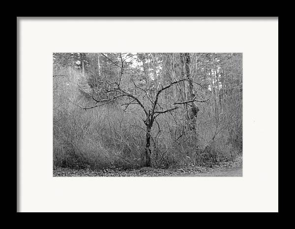 Black Framed Print featuring the photograph The Scary Little Tree by J D Banks