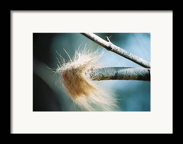 Shed Hair Framed Print featuring the photograph The Shed by Jennifer Trone
