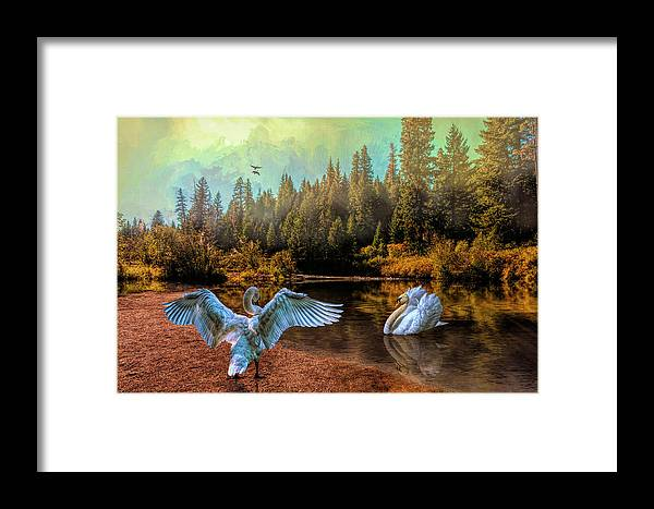 The Showoff Framed Print featuring the photograph The Showoff by Diane Schuster