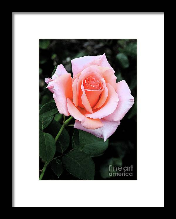 Garden Framed Print featuring the photograph The Smell Of Spring by Leslie Hunziker