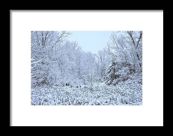 Snow Framed Print featuring the photograph The Snow Falls To The Trees by Taylor McClish