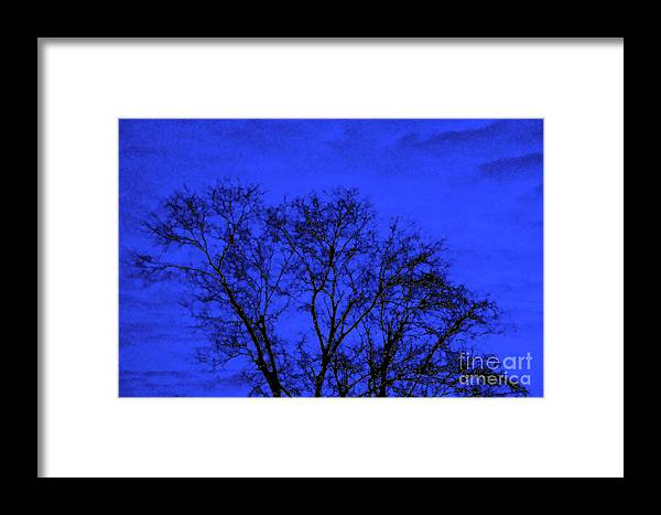 Tree Framed Print featuring the photograph The Sparkle Tree by Andee Design