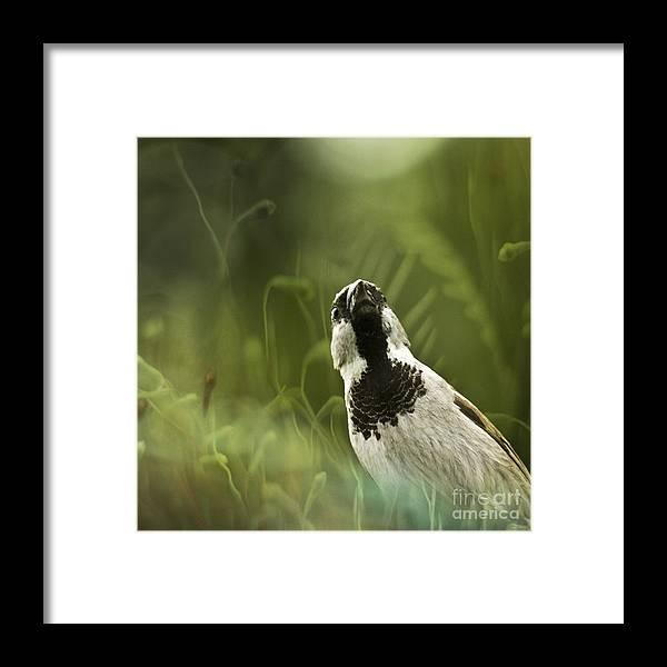 Sparrow Framed Print featuring the photograph The Sparrow by Angel Ciesniarska