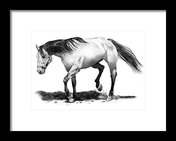 Horse Framed Print featuring the drawing The Stallion by Joyce Geleynse