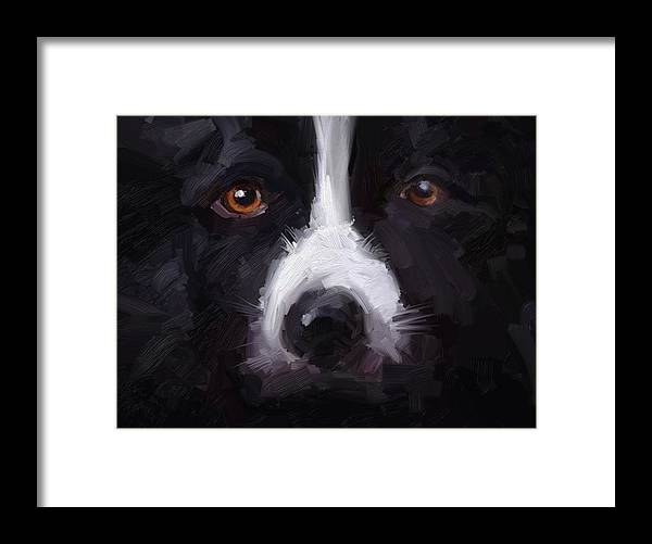 Border Collie Dog Sheepdog Stare Framed Print featuring the digital art The Stare by Scott Waters