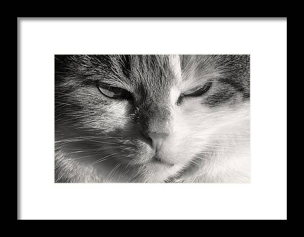 Stare Framed Print featuring the photograph The Stare by Sophie Mae