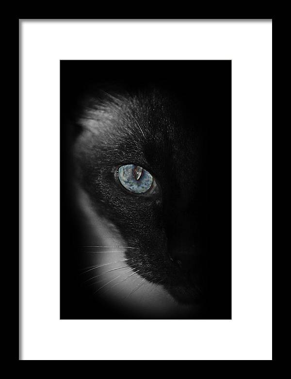 Cat Framed Print featuring the photograph The Staredown by Don Krajewski