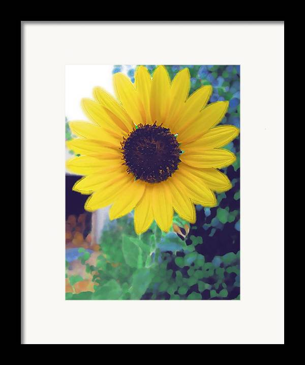 Sun Flower Framed Print featuring the photograph The Sunflower by Chuck Shafer