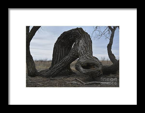 Trees Framed Print featuring the photograph The Tree Creature by Audie T Photography