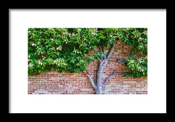 Framed Print featuring the photograph I Grow... Against All Odds by Olivier Nodin