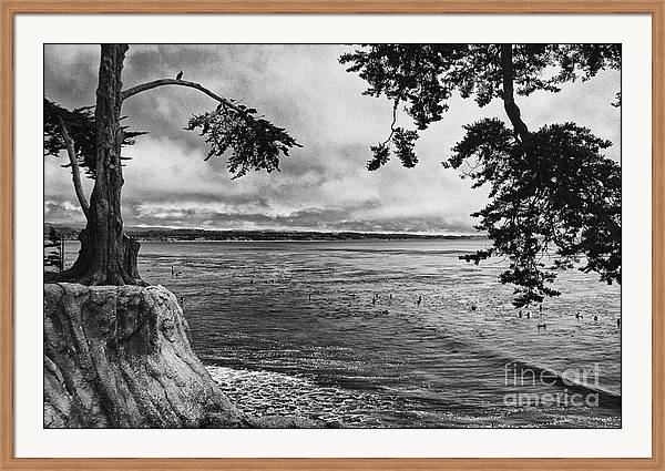 The Trees Of Pleasure Point  by Chris Berry