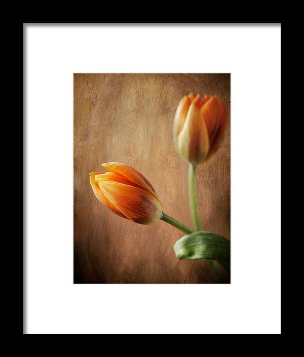 Tulip Framed Print featuring the photograph The Tulips by Jolanta Zychlinska