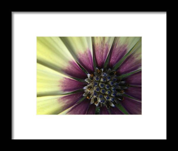 Flower Framed Print featuring the photograph The Twin by Angela Sherrer