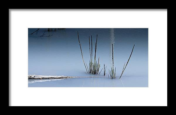 Chad Davis Framed Print featuring the photograph The Vigor Of Life by Chad Davis