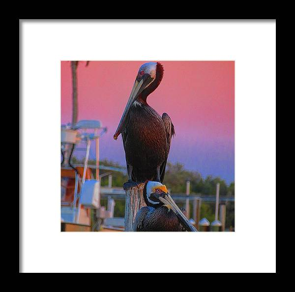 Florida Framed Print featuring the photograph The Waiting Is The Hardest Part by Kellie Simpson
