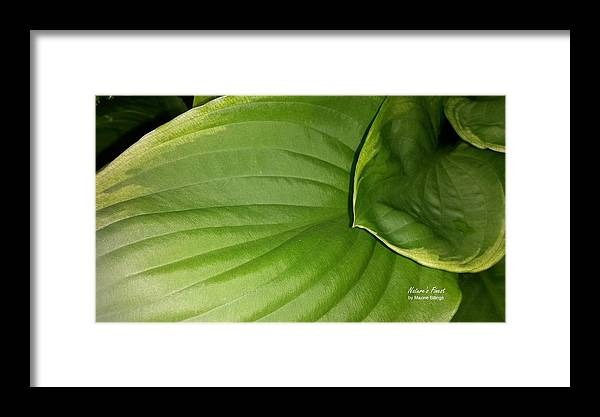 Hostas Framed Print featuring the photograph The Waterslide by Maxine Billings