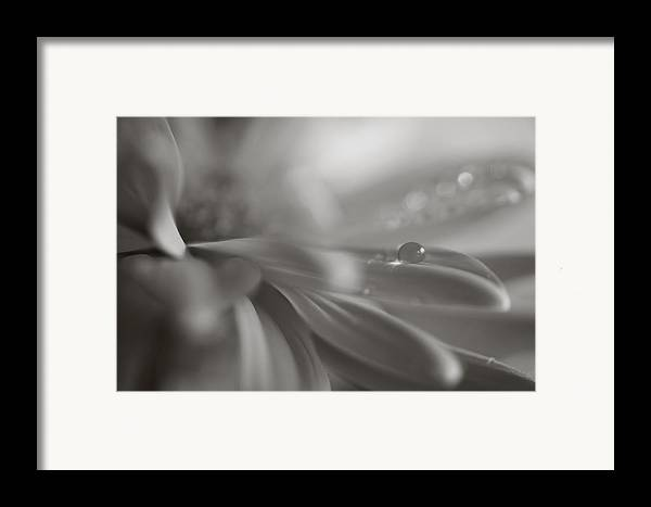 Flowers Framed Print featuring the photograph The Way Your Eyes Sparkle by Laurie Search
