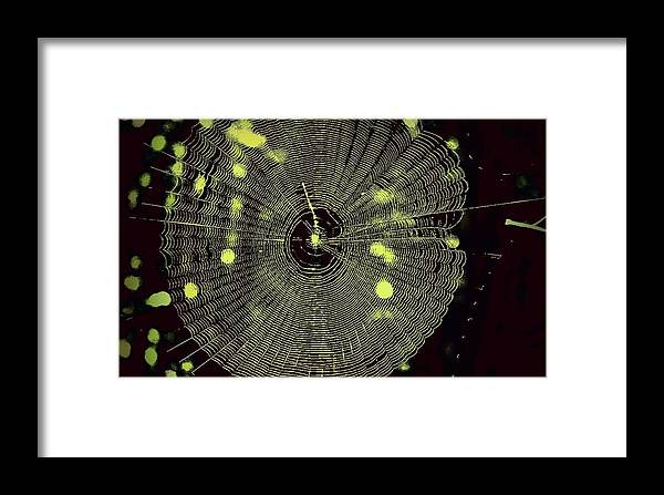 Spider Web Framed Print featuring the photograph The Web by Jill Tennison