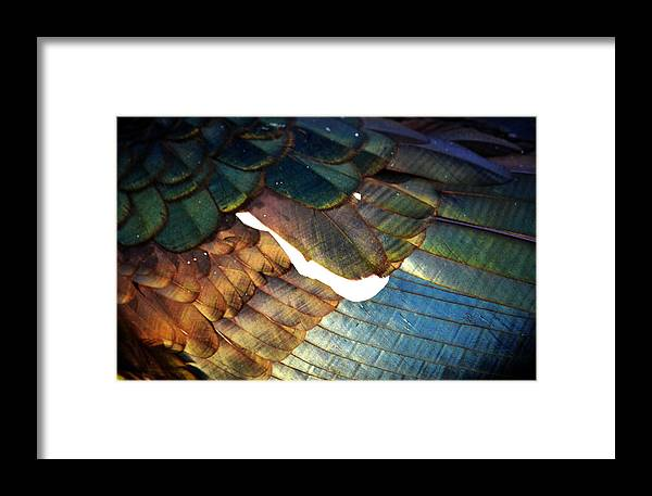 Rd Erickson Framed Print featuring the photograph The White Feather - Iridescent Duck by rd Erickson