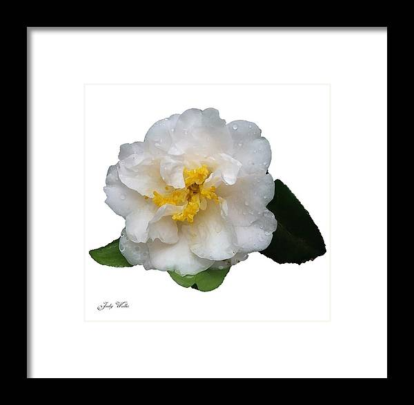 White Framed Print featuring the photograph The White Flower by Judy Waller