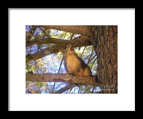 Nature Framed Print featuring the photograph The Winner by Lucyna A M Green