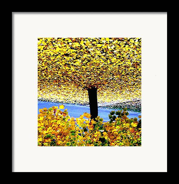 Tree Framed Print featuring the photograph The Yellow Ceiling by Richard Hubal