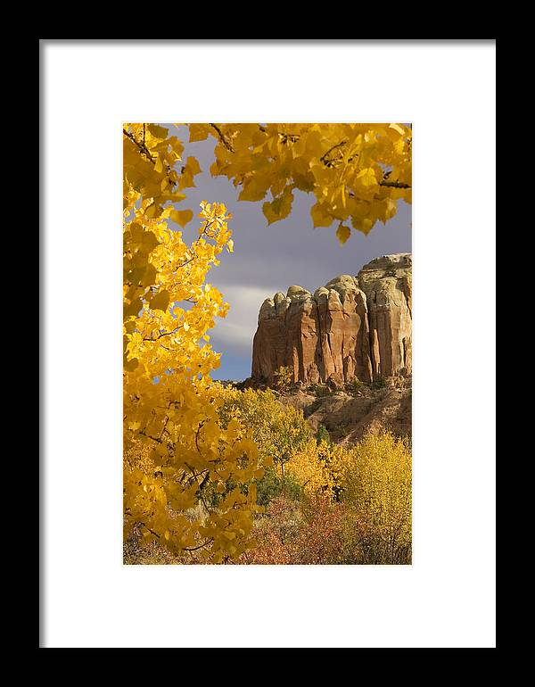 American Southwest Framed Print featuring the photograph The Yellow Leaves Of Fall Frame A Rock by Ralph Lee Hopkins