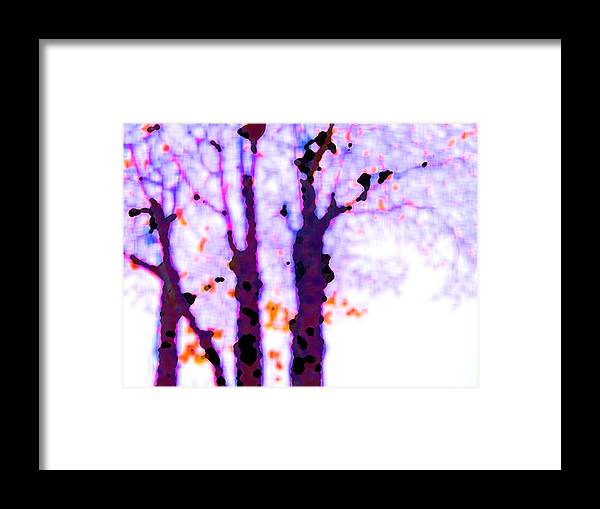 Trees Framed Print featuring the photograph Thee Trees by John Toxey
