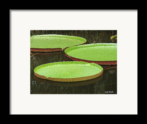 Water Framed Print featuring the photograph There Are Three by Judy Waller