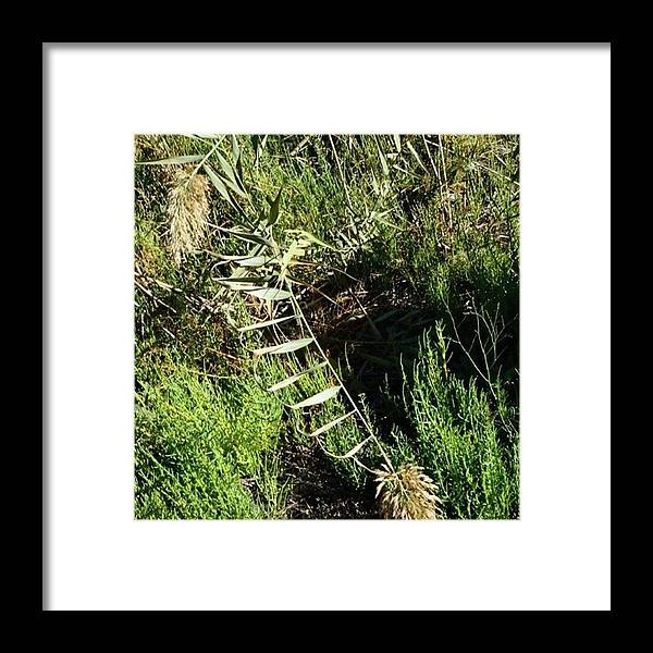 Love Framed Print featuring the photograph There's Always One. The Common Marsh by In My Click Photography