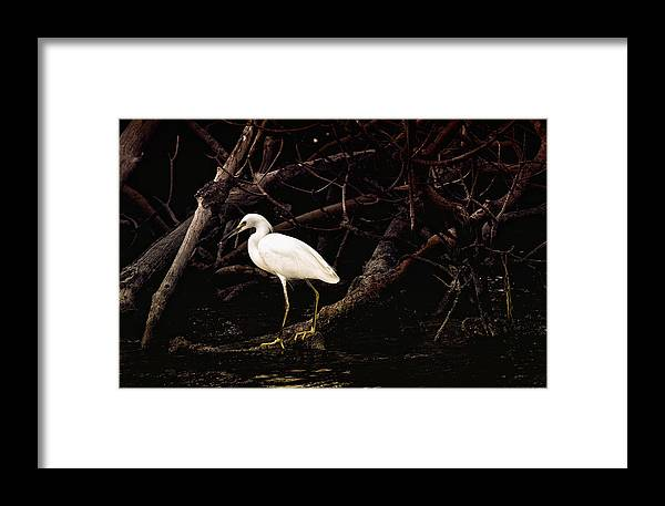 Egret Framed Print featuring the photograph Thicket by Joel P Black